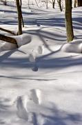 Footprints In The Snow Print by Louise Heusinkveld