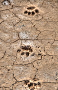 Dry Lake Photos - Footprints by Jack Dean