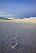 Desert Metal Prints - Footprints Metal Print by Mike  Dawson