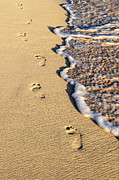 Sand Photo Posters - Footprints on beach Poster by Elena Elisseeva