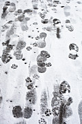 Footprints Print by Tom Gowanlock
