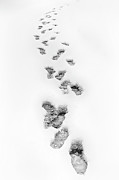 Triad Prints - Footsteps in Snow Print by Dan Carmichael