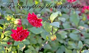 Flora Ehrlich - For Every Thing There Is...