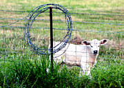 Barbed Wire Fences Photos - For My Protection by Kathy  White