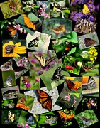 Rosanne Jordan Art - For the Love of Butterflies by Rosanne Jordan