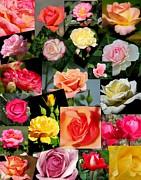 Rosanne Jordan - For the Love of Roses