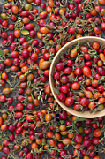 Wooden Bowl Photos - Foraged Rose Hips by Tim Gainey