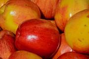 AnnaJo Vahle - Forbidden fruit