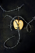 Barbed Wire Framed Prints - Forbidden Fruit Framed Print by Joana Kruse
