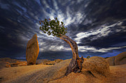 Joshua Tree Prints - Forces of Nature Print by Marco Crupi