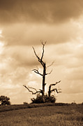 Foreboding Framed Prints - Foreboding Clouds Over Ghost Tree 1 Framed Print by Douglas Barnett