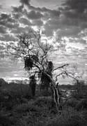Saija  Lehtonen - Foreboding Skies