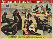 Posters On Drawings - Forepaugh &  Sella Brothers 1900s Seals by The Advertising Archives