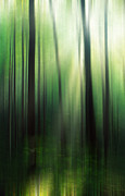 Backlit Framed Prints - Forest Abstract Framed Print by Darren Fisher