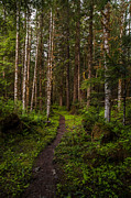 Northwest Photos - Forest Alder Path by Mike Reid