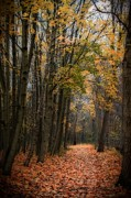 Dream Scape Photo Prints - Forest alley Print by Hugo Bussen