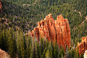 Red Rock Photos - Forest and Hoodoos by Robert Bales