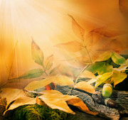 Mythja  Photography - Forest background. Autumn border design with oak acorns