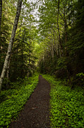 Forest Beckons Print by Mike Reid