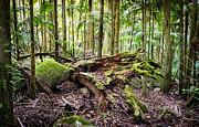 Tim Hester - Forest Conservation