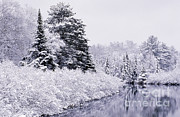 Rod Planck - Forest Covered With Snow