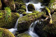 Riffle Prints - Forest Creek Streaming Between Moss Print by Dirk Ercken