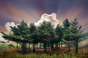 Fall River Scenes Prints - Forest Dawn Print by Debra and Dave Vanderlaan