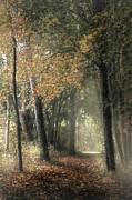 Hugo Bussen - Forest dream