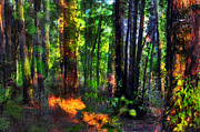 Skip Hunt Photo Acrylic Prints - Forest Dream Acrylic Print by Skip Hunt