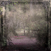 Nc Prints - Forest Dream Print by Stylianos Kleanthous