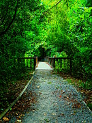 Forest Entrance Print by Ester  Rogers