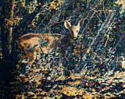 Fawn Prints - Forest Fawn Print by Dan Terry