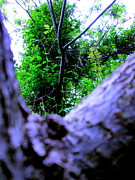 Tree And Wood Photography - Forest For The Tree by Allen n Lehman
