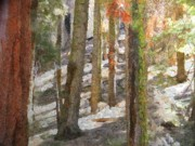 National Park Drawings - Forest for the Trees by Jeff Kolker