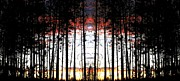 Silhouette Digital Art - Forest Fusion by Will Borden
