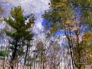 Christina Rollo - Forest Impressions