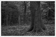 Black And White Rural Photography Prints - Forest In Japan Temple Print by Setsiri Silapasuwanchai