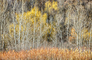 Reed Photos - Forest in late fall at Scarborough Bluffs by Elena Elisseeva