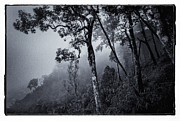 Black And White Rural Photography Prints - Forest in the fog Print by Setsiri Silapasuwanchai