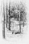 Snow-covered Landscape Metal Prints - Forest in Winter Metal Print by Tom Mc Nemar
