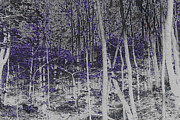 Jonathan Welch Prints - Forest  Print by Jonathan Welch