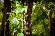 Tim Hester - Forest Leaves