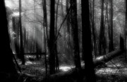 Tress Posters - Forest Light in Black and White Poster by Douglas Stucky