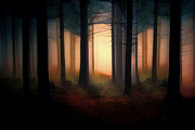 Shanina Conway - Forest Light