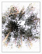 Marcia Lee Jones Prints - Forest Print by Marcia Lee Jones