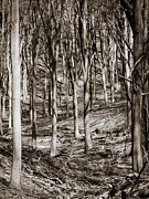 Belgium Photo Metal Prints - Forest Monochrome Metal Print by Wim Lanclus
