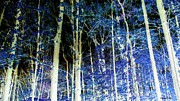 Photo Manipulation Mixed Media Posters - Forest Of Dreams Poster by Elizabeth Calder