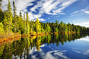 Pine Framed Prints - Forest reflecting in lake Framed Print by Elena Elisseeva