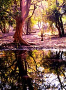 Deepti Chahar - Forest Reflection