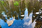 Jamie Pham - Forest Reflection
